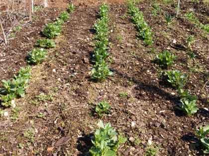Guida giardino giardinaggio e coltivazione - Guida giardinaggio ...