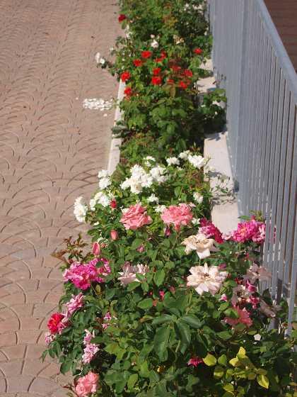 Aiuole for Trasforma un semplice terreno in un colorato giardino